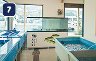 四万十川西部漁業協同組合鮎市場